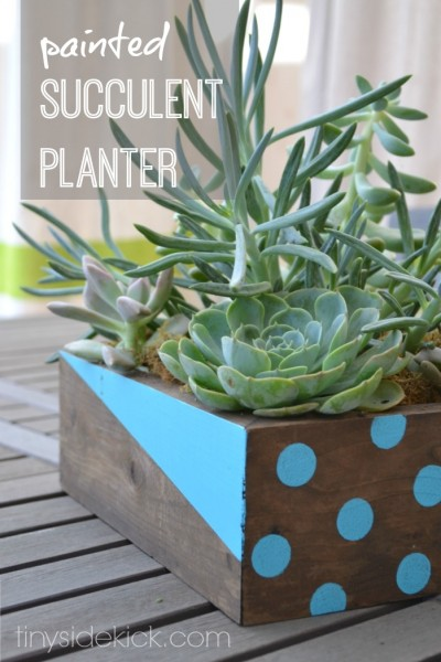 painted-succulent-planter