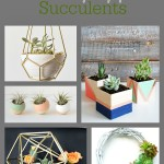19 Creative Ways to Display Succulents